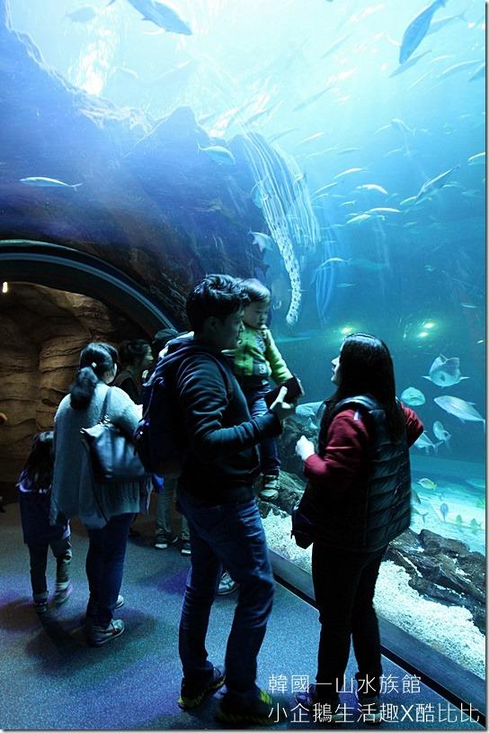 一山水族館AQUAPLANET20160227-140933