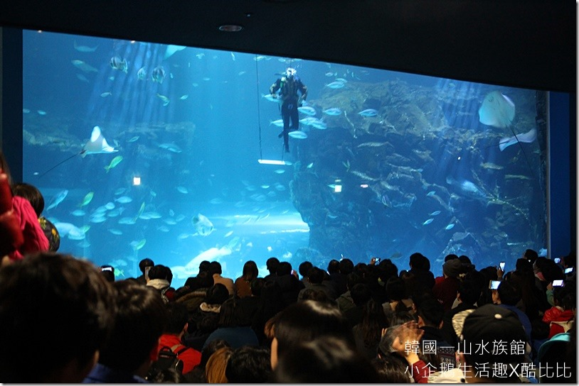 一山水族館AQUAPLANET20160227-141250