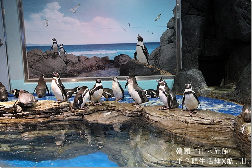 一山水族館AQUAPLANET20160227-143902