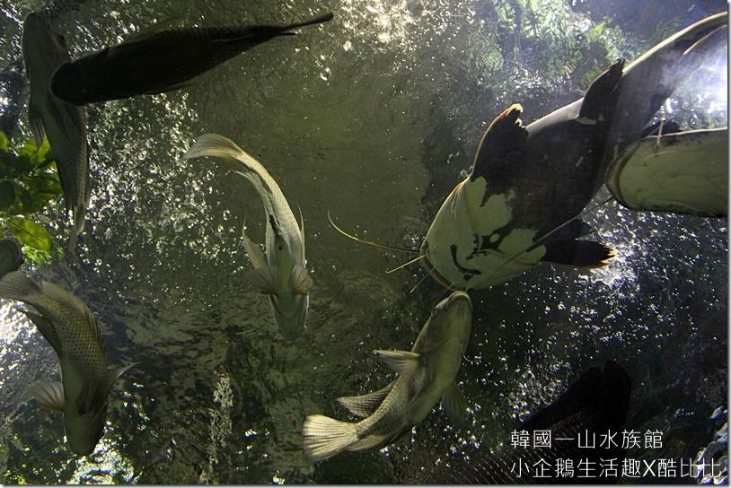 一山水族館AQUAPLANET20160227-144949